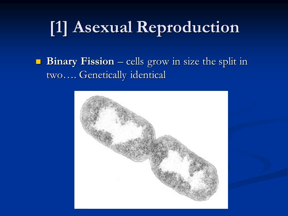 [1] Asexual Reproduction